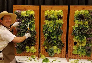 chef's vertical salad wall